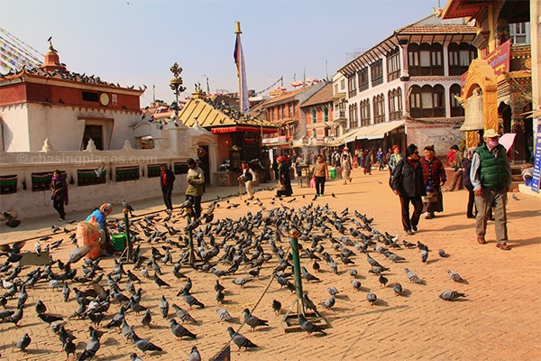 Pigeons occupying the path around Bodnath