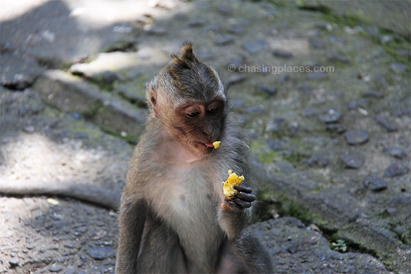 Enjoying some food at the Sacred Monkey Forest Sanctuary