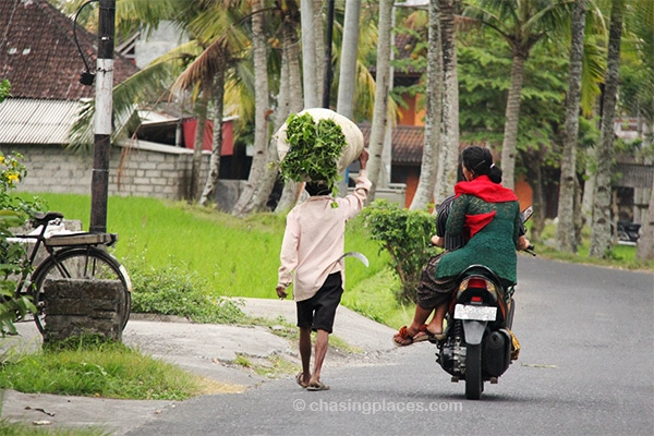 Local farmers, minutes outside of Ubud