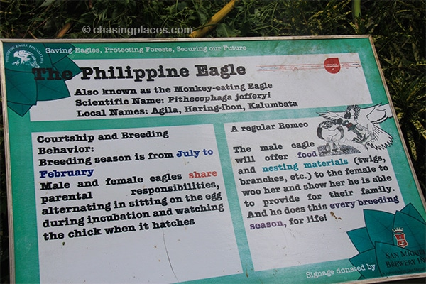 Interesting information about the Philippine Eagle