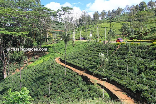 Be prepared for miles upon miles of scenery like this around Nuwara Eliya