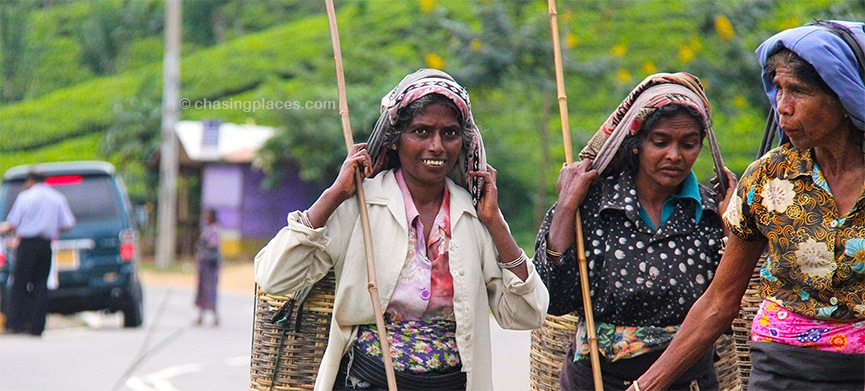 Tea pickers,-Hill Country Sri Lanka.