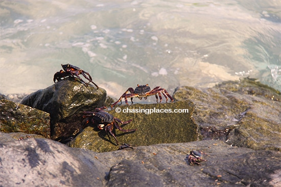 Crustaceans, and more crustaceans on Maafushi Island
