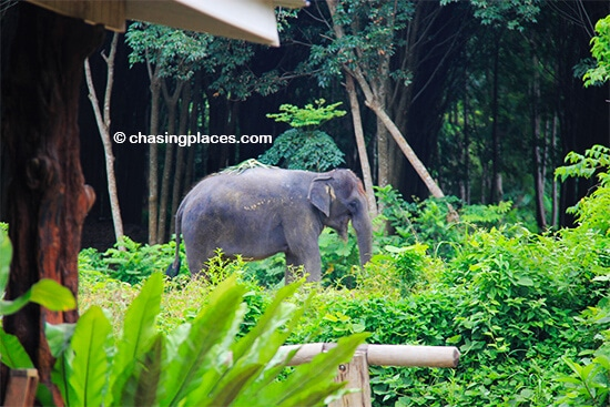 Consider going for an elephant ride while on Lanta