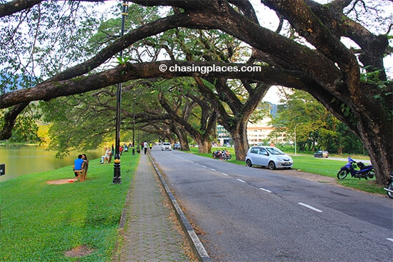 The large, mature trees surrounding Taiping's Lake Gardens are beautiful