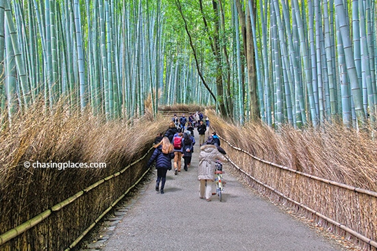 The Bamboo Grove with a medium-sized crowd around 10 am