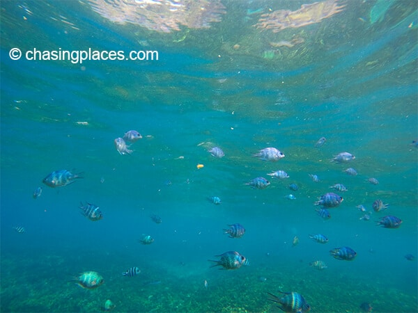 A glimpse of underwater life, Pulau Redang.