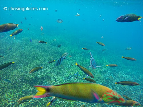 The underwater world at Pulau Redang