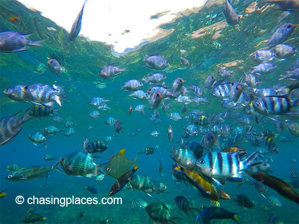 There was no shortage of fish while snorkeling at Pulau Redang.