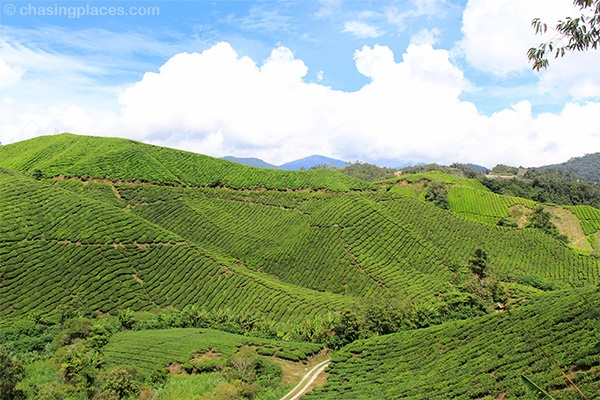 Chasing Places Travel Guide: My Unforgettable Weekend Getaway to Cameron Highlands